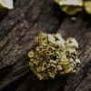 Pacton Gold获得红湖钻探许可证