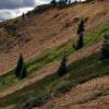 ArcWest扩大Oxide Peak铜金项目