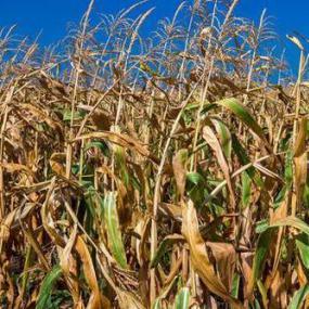 多国禁止粮食出口 一些国家粮仓告急