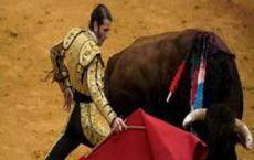 斗牛士在斗牛时为什么要使用红色的布是牛对红色很敏感 还是为了增强现场感染力