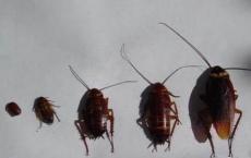消灭蟑螂的三个小方法 学到你就赚到